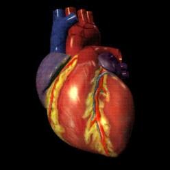 Poem: Heart to heart