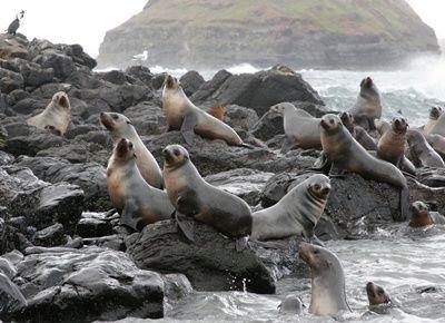 Shark supermarket...Seal Rock