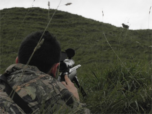 Sighting the shot after using Deerhunter's Edge Hunting Predictor
