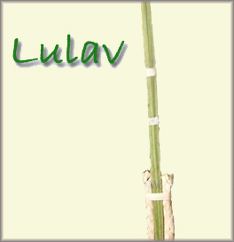 a palm branch (in Hebrew, lulav)