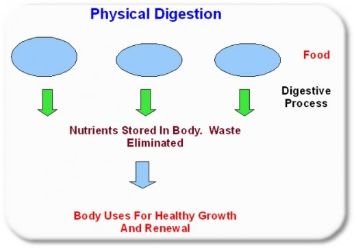 A diagram of the physical digestive system.