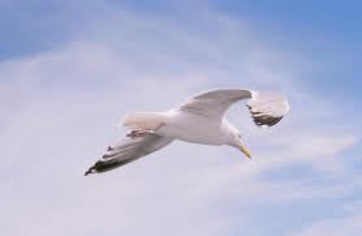Flight Towards Freedom
