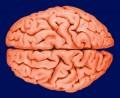 Dopamine Deficiency -- Deficiency Symptoms