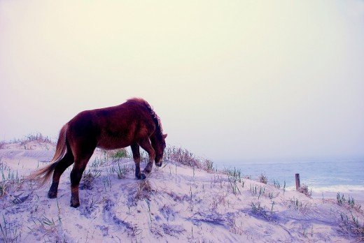 This wild horse ignored the sign to keep off the dunes.