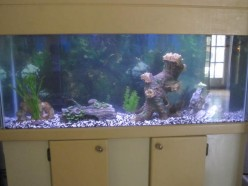 Cool Aquarium Backgrounds and Aquarium Ornaments