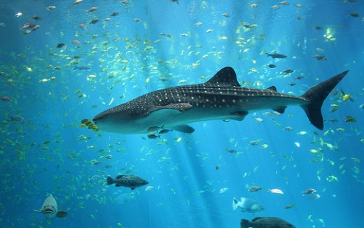 Shark.      Photo by: Christian Bier