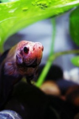 A small Biorb fish tank will do well for your betta!