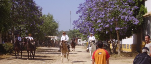 Jacaranda Trees in El Rocio