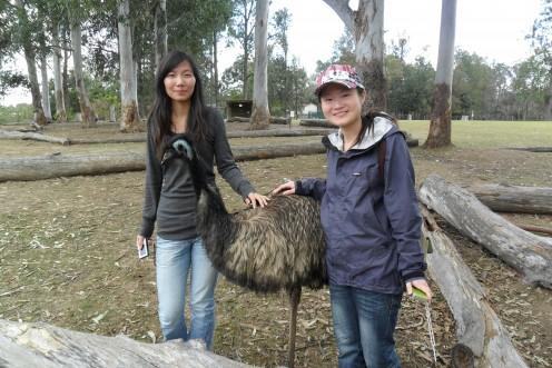 Meet an emu