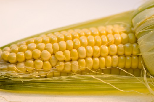 Corn Macro using home-made light-box