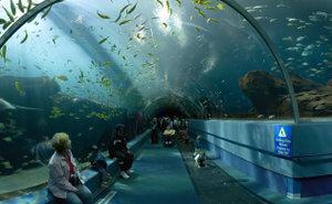 The entrance of Ocean voyager transforms you to open ocean. http://en.wikipedia.org/wiki/Georgia_Aquarium
