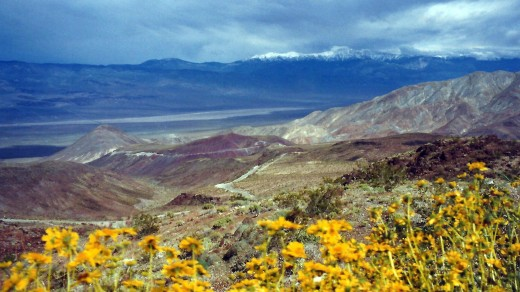 Death Valley National Park with some wildflowers