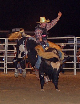 A cowboy riding a bull at the Benson Mule Days Rodeo.