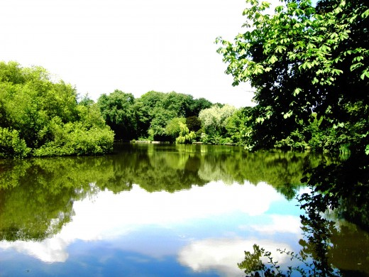 Local lake enjoying a fine summers day. Photograph by D.A.L.