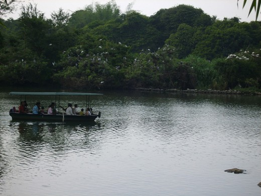 Boating @ Ranganthittu Bird Sanctuary