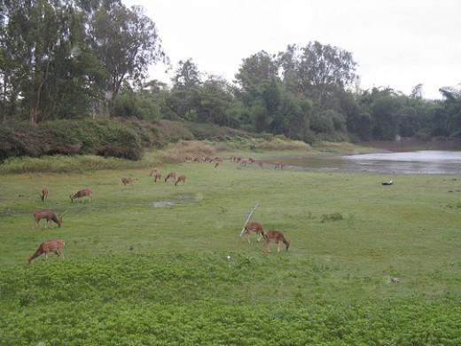 Waterhole @ Bandipur