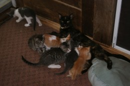 Catastrophe...rescued mother cat w/her 4 kittens plus a few from other rescued moms.  Moms now spayed; kittens scheduled for spay/neuter