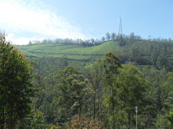 Munnar - A Beautiful Hill Station in God's own country (Kerala)