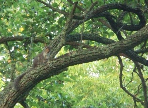Squeaky Squirrel