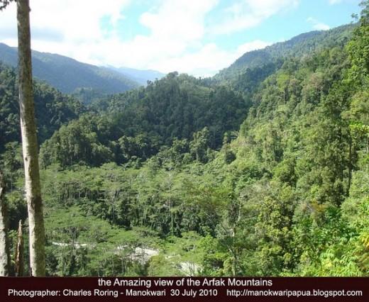 Tropical rainforest of Arfak Mountains