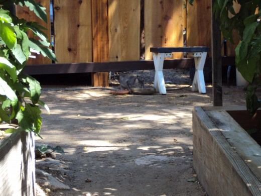 A step stool in the garden with Stripey cat underneath it.