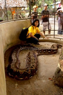 That's me with Prony the python