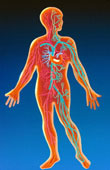 Prediabetes can wreck havoc on the heart and circulatory system.