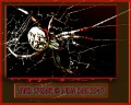 PhotoShop Scary Spider Poster