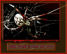 By naming this photshop design 'Yard Spider' it adds to the scare factor because the things closest to us are generally those things that can scare us the most!