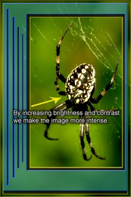 When compared to the original picture, it is easy to see how the spider photo intensifies by adding contrast and reducing brightness.