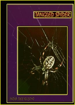 Tangled Spider