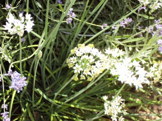 Closeup of the white flowers.