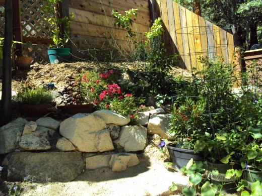 Fuchsia colored flowers and rocks in the garden.