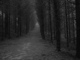 The path through the scary woods, from flikr.com