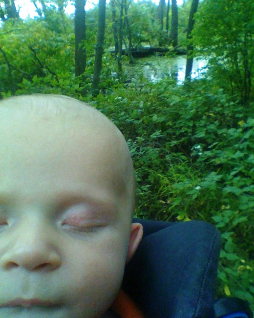 K-billy asleep on our hike in Lake Farm Park, Madison, Wisconsin, USA.
