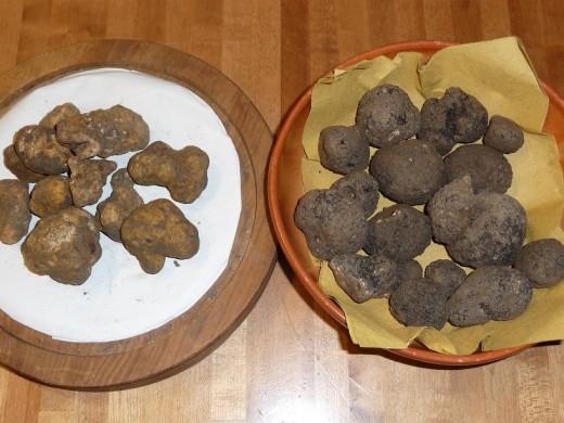 L: white truffles, R: black truffles