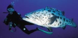 Marine life above the reefs
