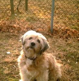 My dog Tanya