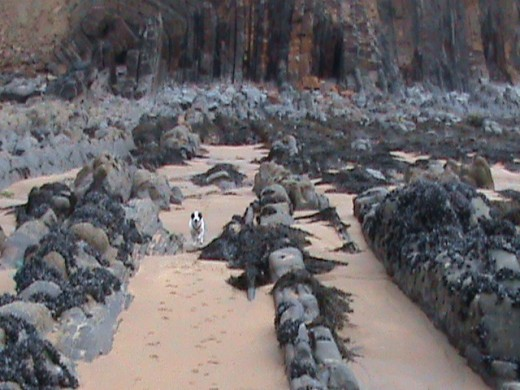 Our terrier 'Bandit' enjoys the beach - again, the 'stripes' of rock in the foreground are now buried under sand.