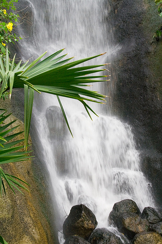 Eden Project Waterfall in the Tropical Biome.   Photo by: Matt Browne