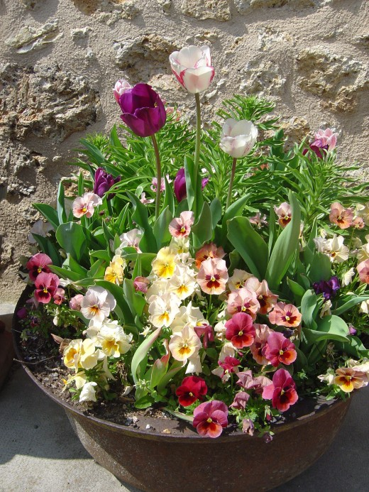 Our planter looks lovely in Spring