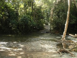 One of a number of creek crossings on the track north of Cape Trib.