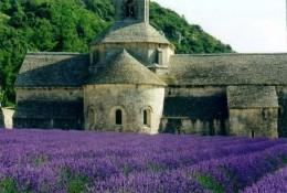 Lavender garden in Provence, France
