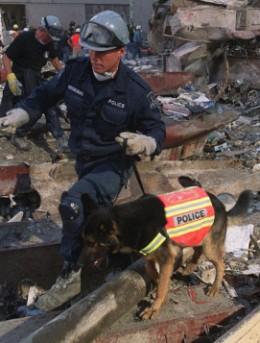 Rescue 911 Dog
