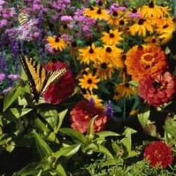 Creating Stunning Butterfly Gardens at Home