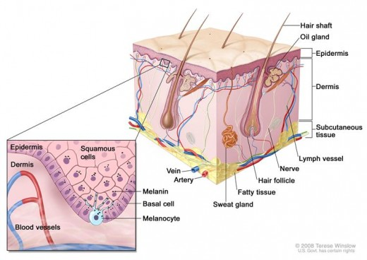 Melanoma is a disease in which malignant (cancer) cells form in the skin cells called melanocytes (cells that color the skin).