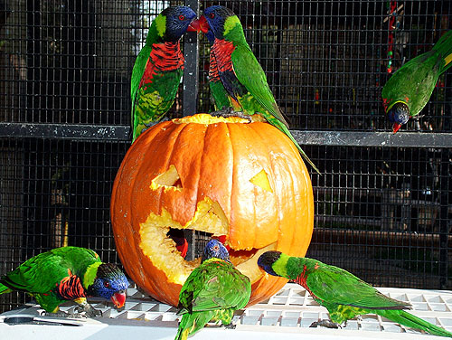 Enjoy a Halloween party at the Aquarium in Long Beach, California.