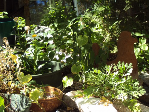 The garden at various angles with the shining sunlight on the vegetables.