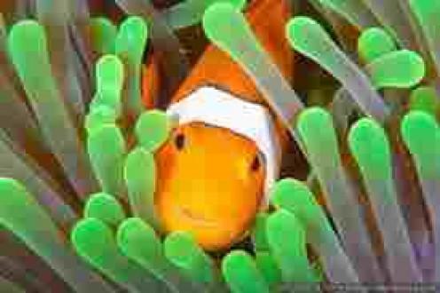 Theeeeer's Nemo!
