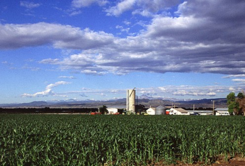 Corn production in Colorado.